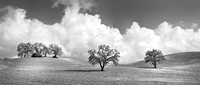 Oak Trees Hills and Clouds BW