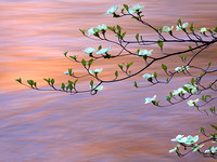 Dogwood Branch and Sunset Water